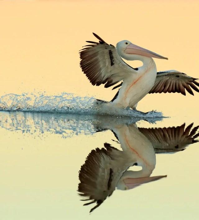Dit zijn de mooiste vogelfoto's van het jaar