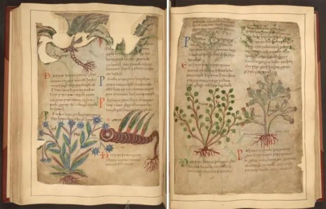 herbal 1