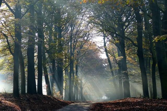 autumn-1984351_960_720
