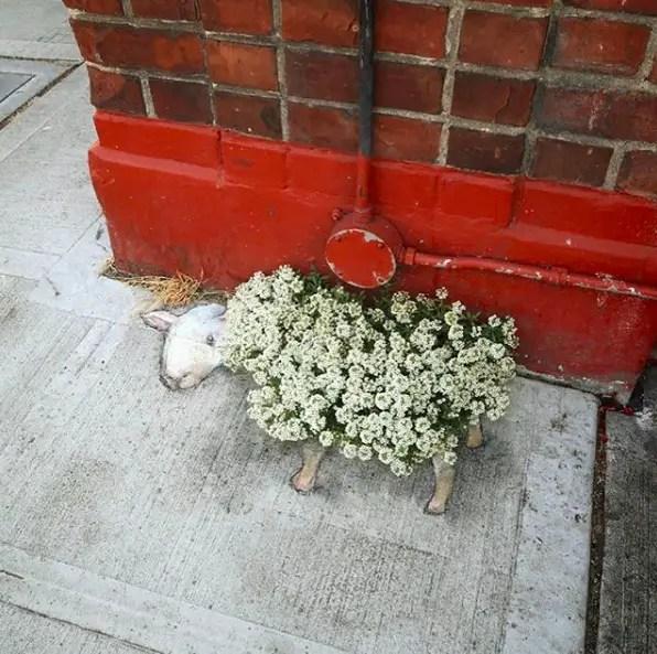 Schaapje bloemenvacht