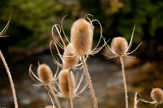7x Wintertuin Inspiratie : 9 planten die je tuin in de winter laten floreren paradijsvogels