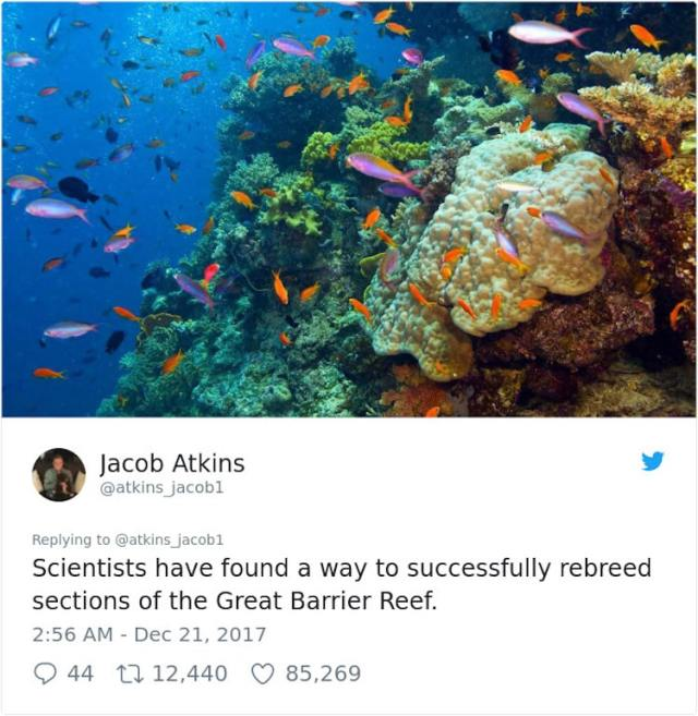 Jacob Atkins - great barrier reef