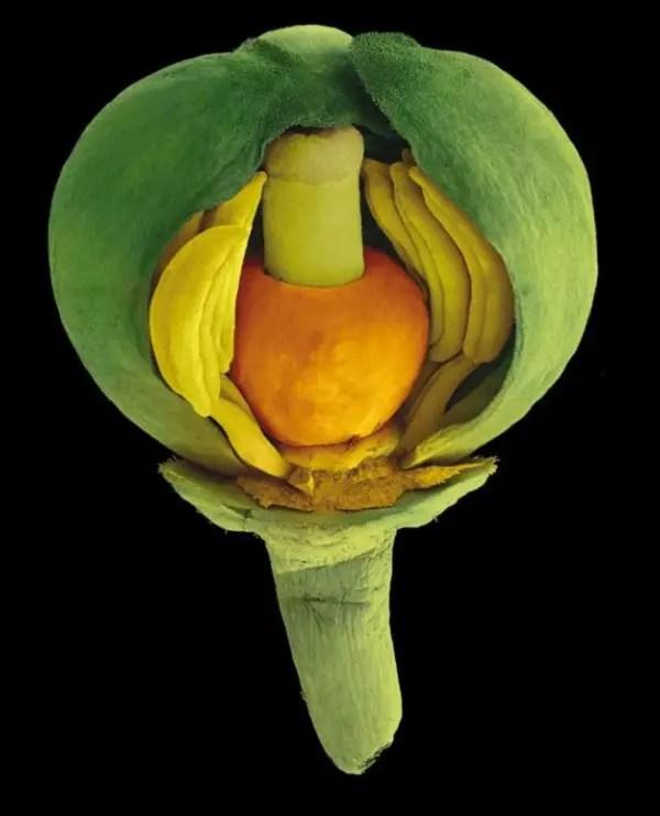 bijzondere zaden 16