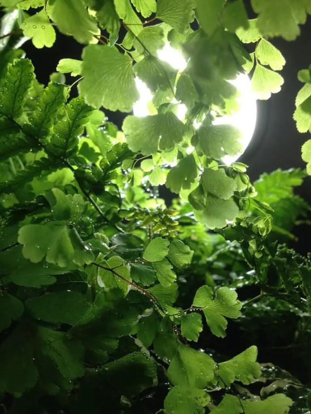 planten licht design 3