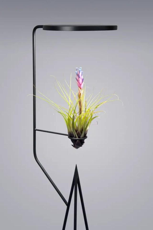 planten licht design 4