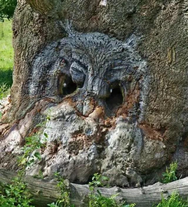Deze 13 bijzondere bomen zijn vermomd als dieren en sprookjesfiguren
