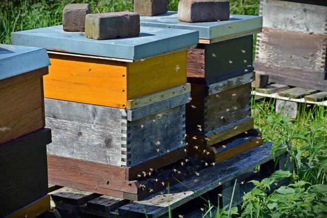 Bijen zijn belangrijk 4