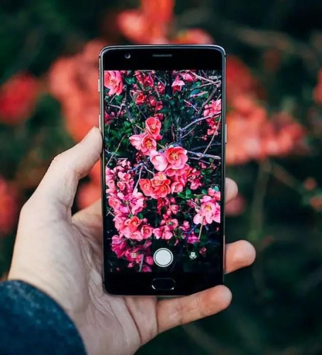 Ga met je mobieltje de natuur in want deze app herkent planten en bloemen!