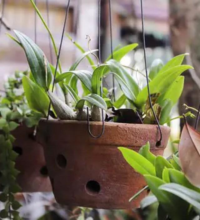 De 5 makkelijkste planten voor mensen zonder groene vingers