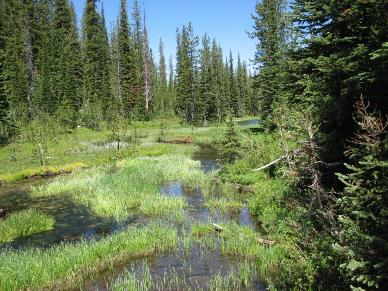 Wetland Meadow, Sawtooth National Forest