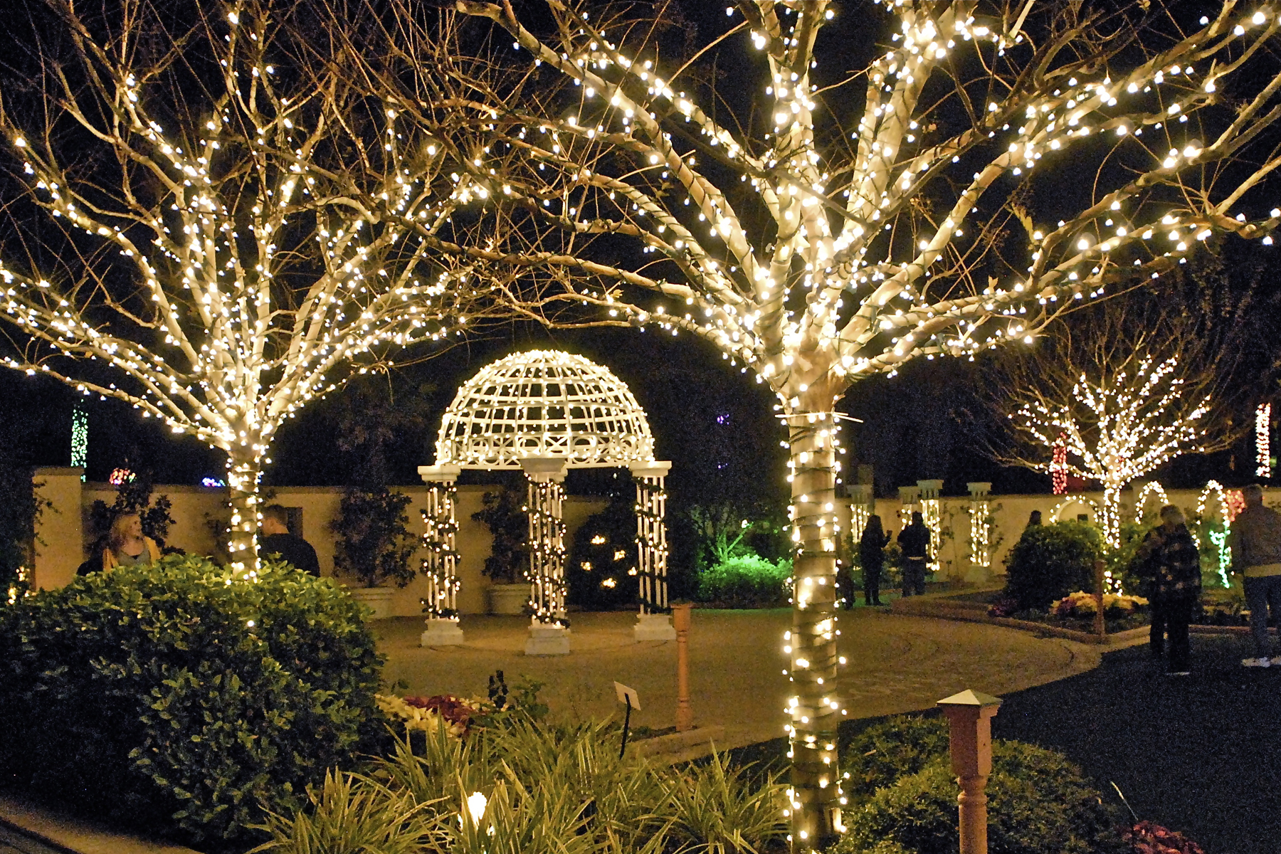 Largo Botanical Gardens Christmas Lights 2020 Florida Botanical Gardens Cancels 2020 Holiday Lights in the
