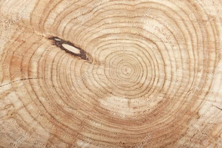 tree-stump-space