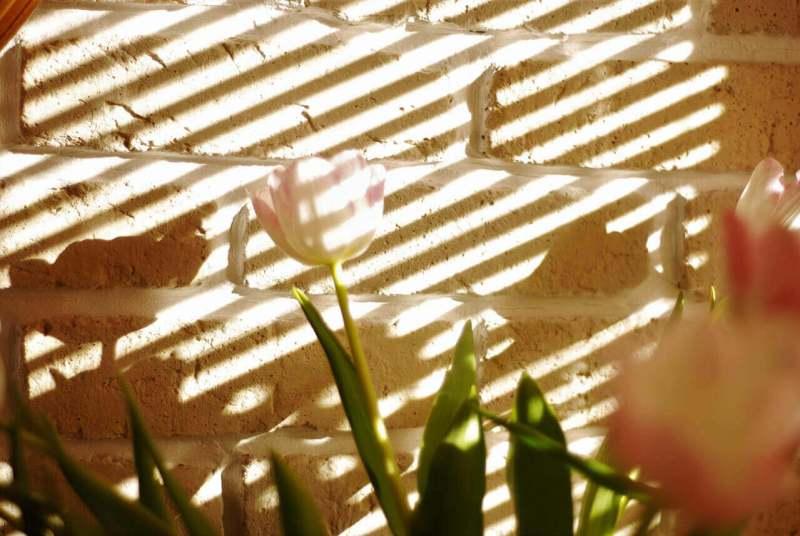 piaskowa cegła iefektowne cienie