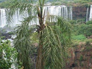 Iguazu_26_2.JPG