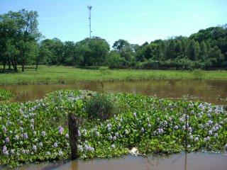 Villa-Florida2.jpg