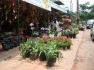 Blumencenter2.jpg