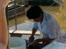 Fischkauf5.jpg