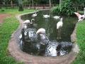 Vogelpark_60_1.JPG
