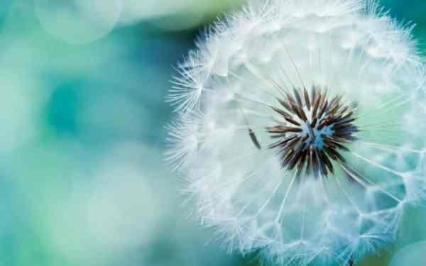 fibonacci-shaman-spiritual