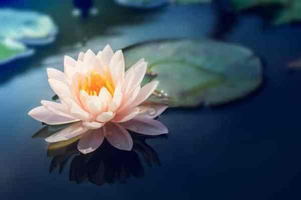 spiritual-teachings