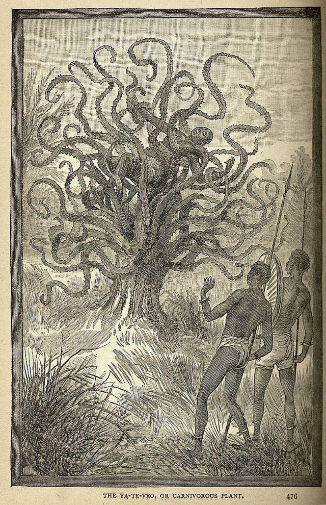The Ya-Te-Veo, or Man-Eating Plant