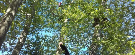 Quand les pompiers s'entraînent dans les arbres – le retour