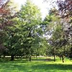 Parco Brasca - percorso botanico
