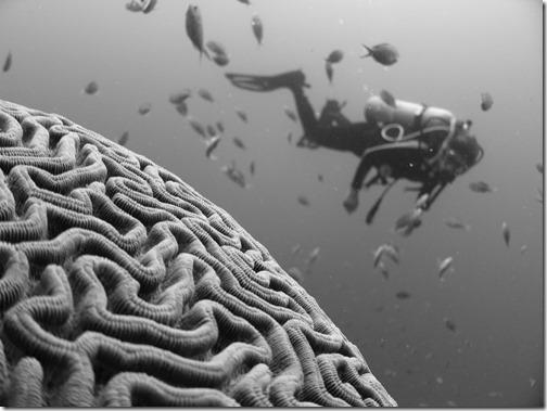 Le cerveau de l'enfant (photo de Vlad Tchompalov)
