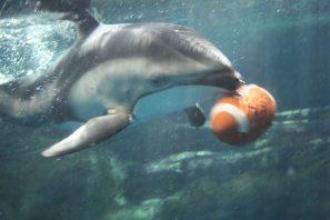 aquarium osaka 2