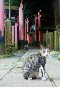 fushimi 8