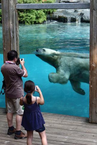 Vue sur les ours polaires à La Flèche