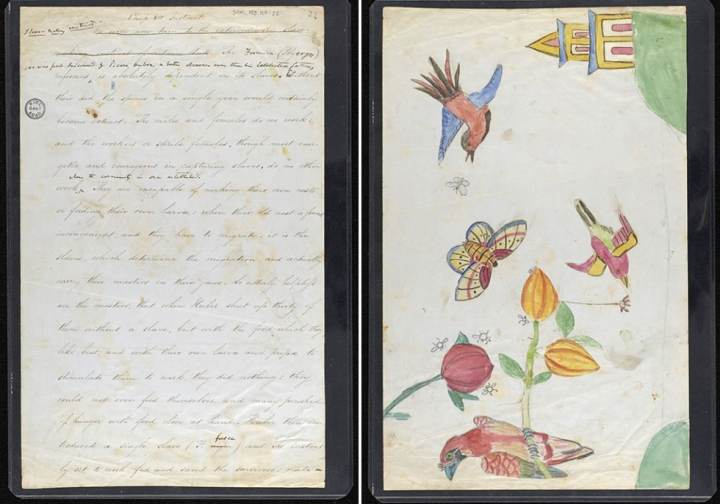 enfant-dessin-darwin-manuscrit-origine-espece-12