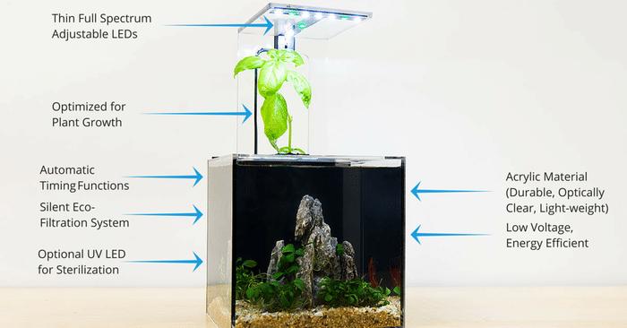 ecoqube c l aquarium hydroponique sans entretien pour tous guide du parent galactique. Black Bedroom Furniture Sets. Home Design Ideas
