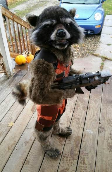 rocket-racoon-costume-1