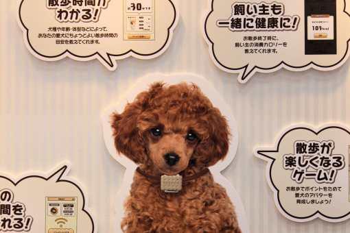 Truc à base de chien (rien compris)