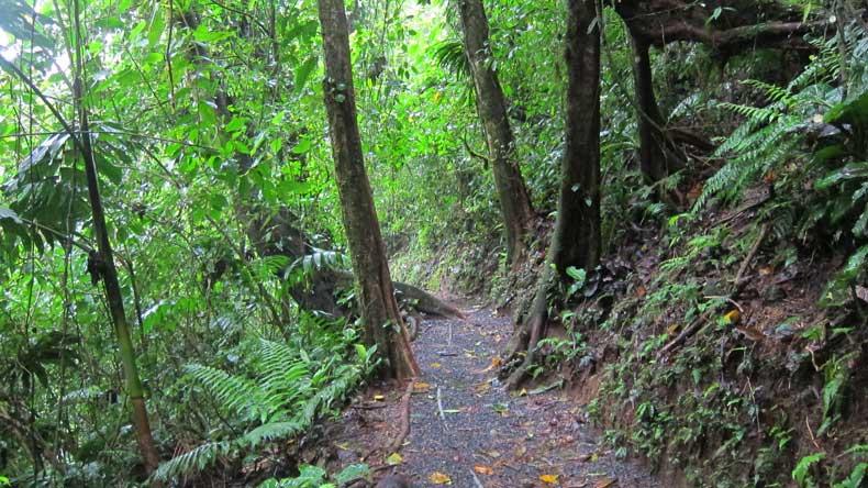 Parenthood and Passports - Hanging Bridges Costa Rica