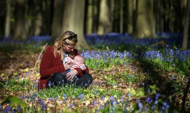 La forêt magique d'Hallerbos - Belgiqueblog-de-voyageforet-bleue-hallebors-belgiquebernard-delhalle-nature-foret-voyage-en-famille13054673_10209259569272304_1887931161_o