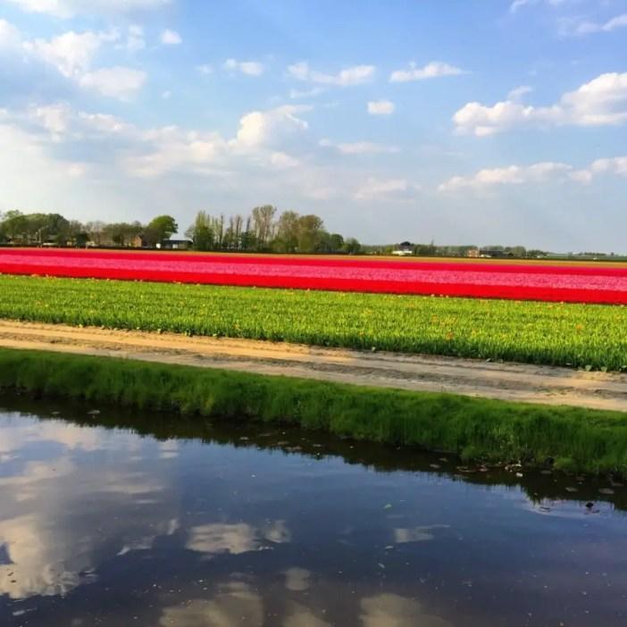 Découvrez plus beau parc printanier du monde : Kukenhof aux Pays-Bas !kukenhof,paysbas,holland,fleur, tulipe,parc,parcprintanier,famille,sortie,promenade,canaux,moulinthumb_IMG_9320_1024