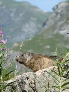 la Savoie en été blog-de-voyageparc-de-la-vanoise-alpesmontagnesp1160723