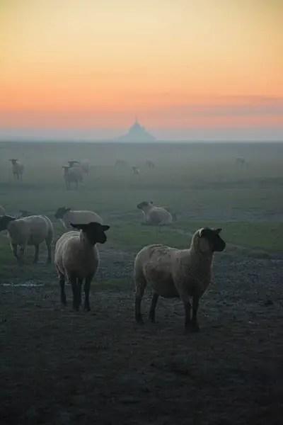 vue sur le Mont Saint Michel en famille - Blog voyage en famille