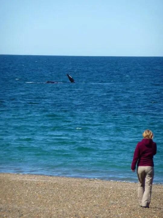 observation des baleines en argentine