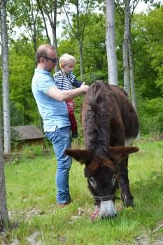 enfant brossant un âne, blog voyage en famille