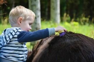 Loisirs Loire Valley enfant brossant un âne, blog voyage en famille