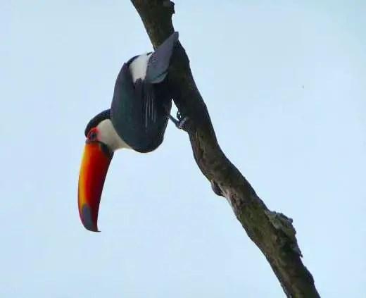 roadtrip argentine toucan