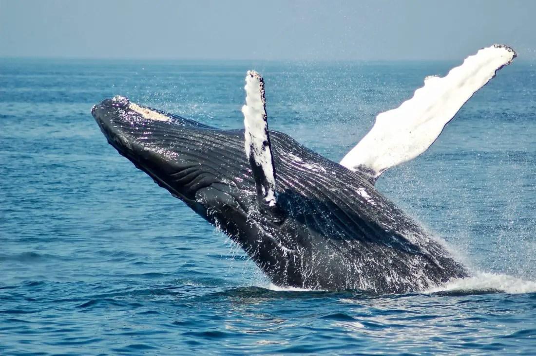 Islande avec enfants - baleine