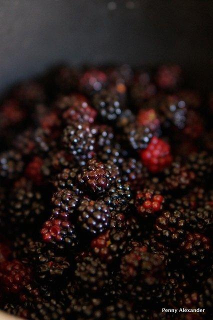 blackberries in a pan
