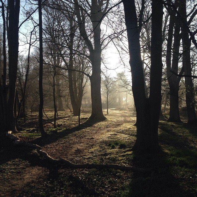 Hothfield Heath Sunrise