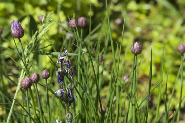 Garden-in-May-03