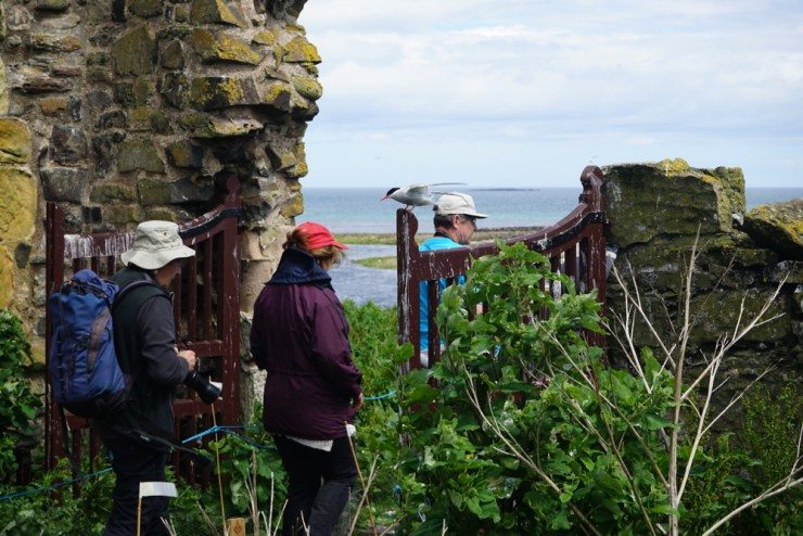Northumberland - A family adventure - 8