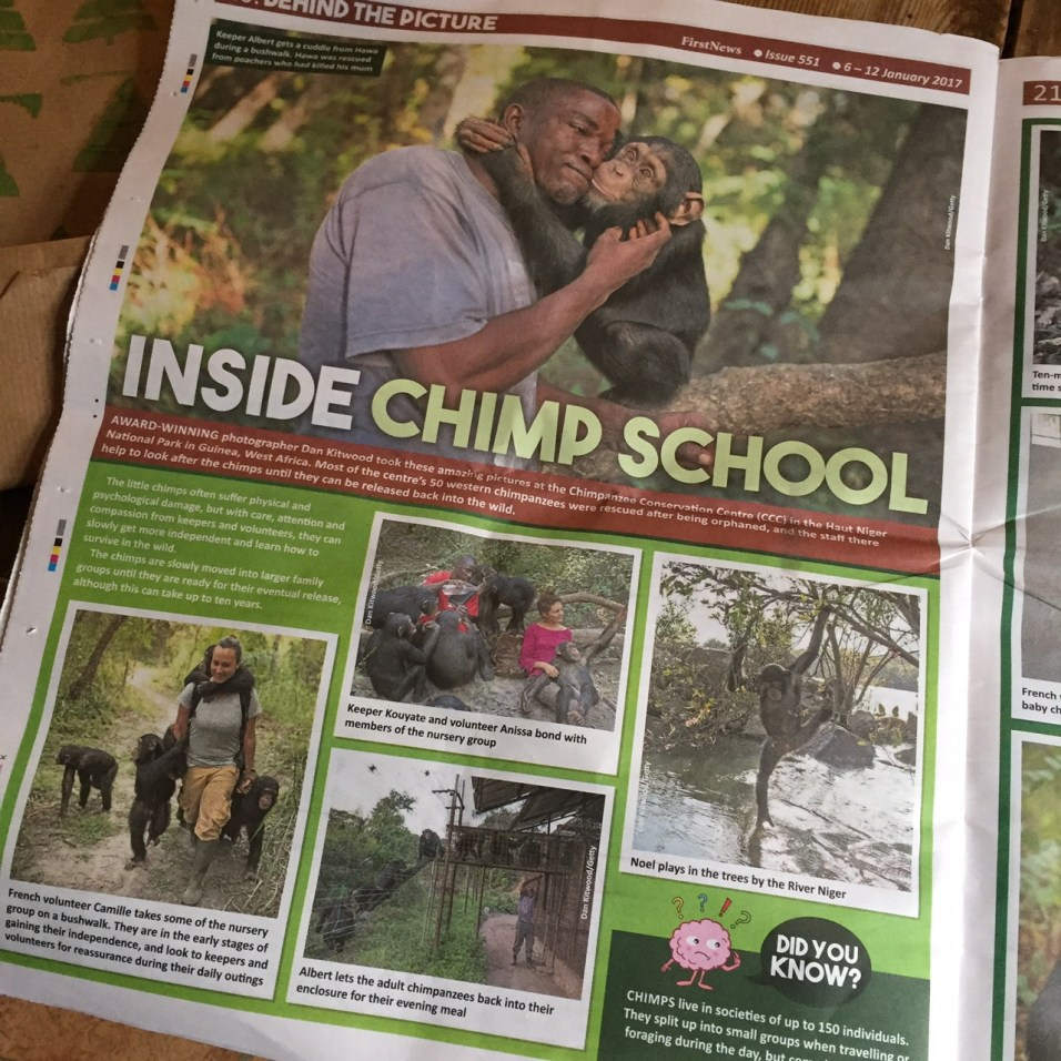 love the pictures of chimp school!